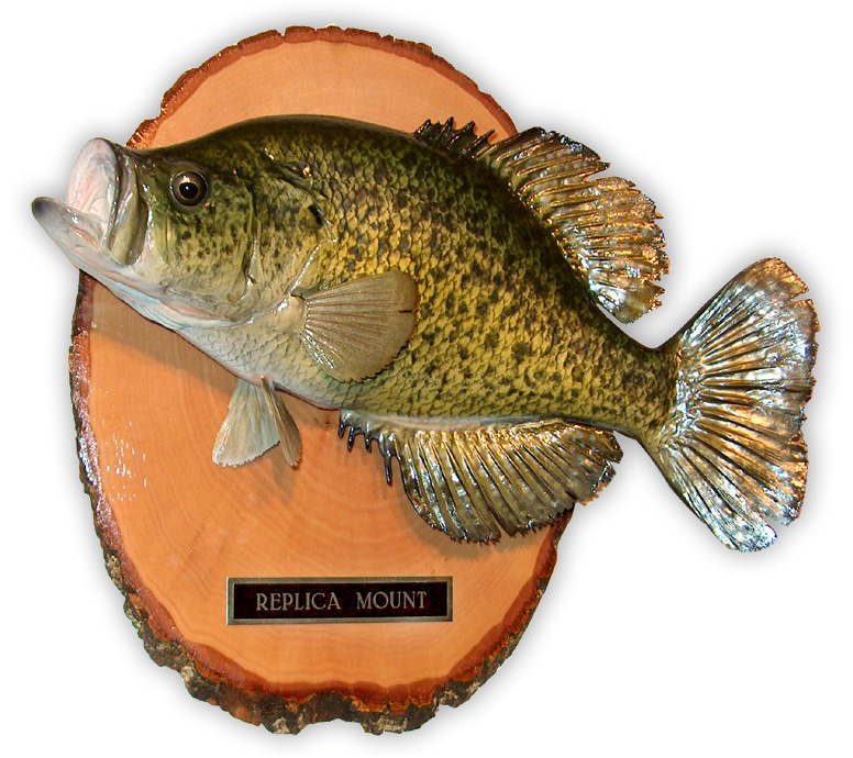 Classic Fish Mounts by Second Nature Taxidermy